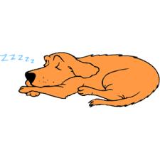 Dog_Sleeping_3