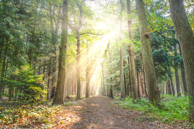 forest-fog-sunny-nature