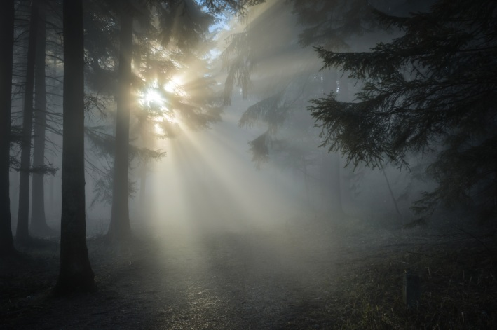 WoodFogFadedSunlight