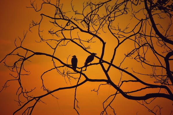 2CrowsNTreeAutumnSKy