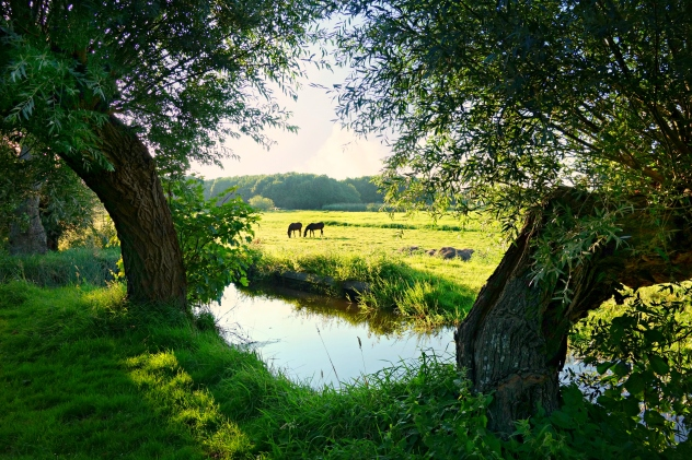 CountrysideHorsesCreek
