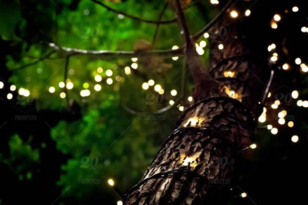 FirefliesOnTree