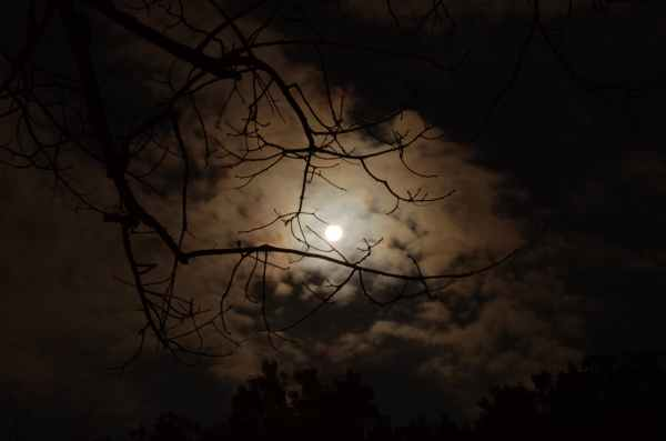 MoonlightThruTrees