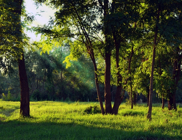 TreesMeadowSunGilted